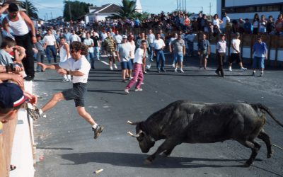 azores bull running festival on terceira island