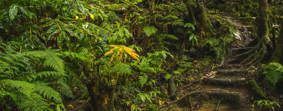 azores rainforest sao miguel azores