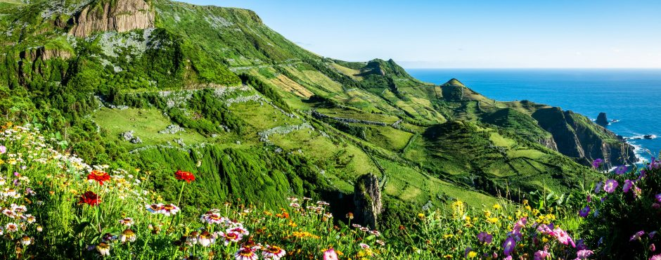 azores hiking trail with flowers in cliff sao miguel