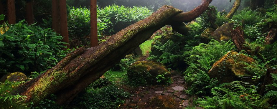 azores weather tropical forest