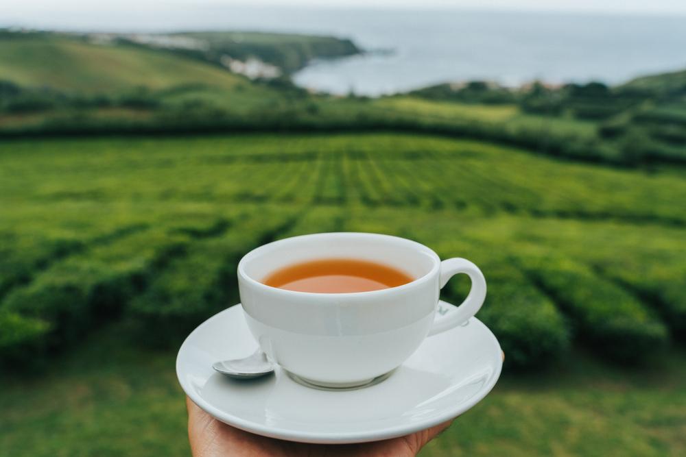 Azores Black Passion Fruit Tea at Sao Miguel Plantation