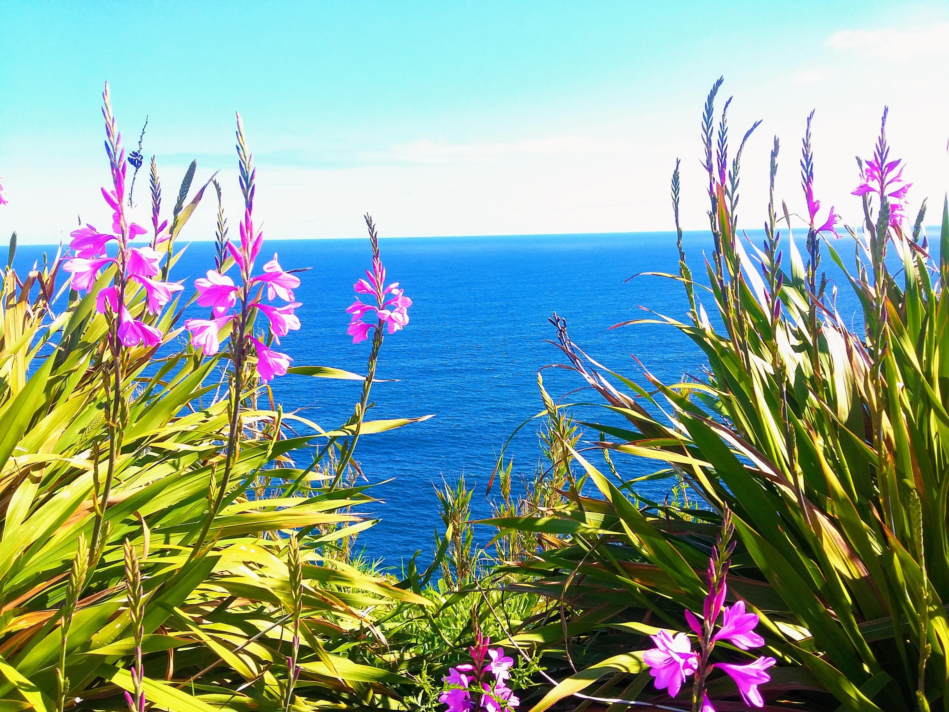 sao miguel flowers hydrangea ocean azores