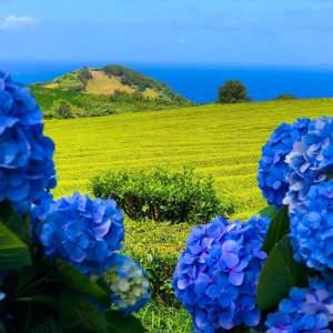 Azores Tea & Coffee