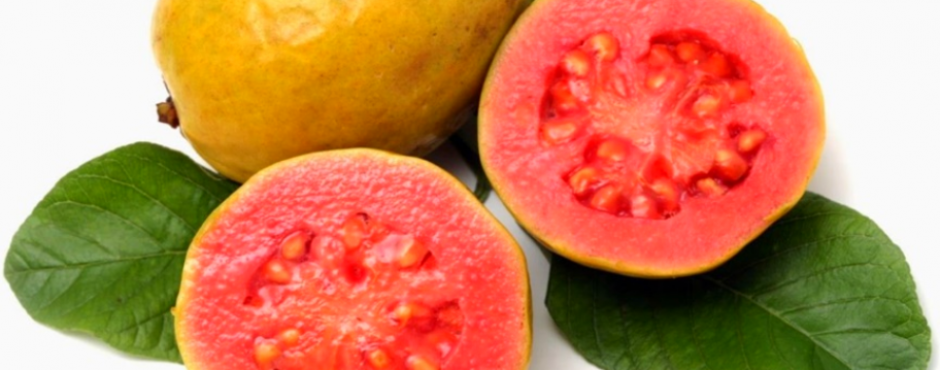 tropical azores guava portuguese fruit tree